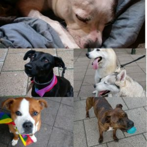 Help for Homeless Hounds